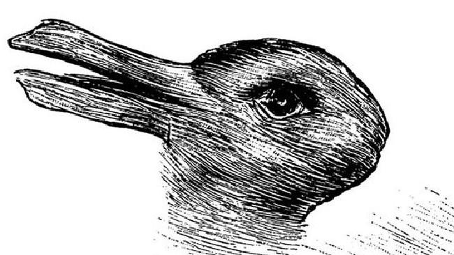 Duck Rabbit illusion
