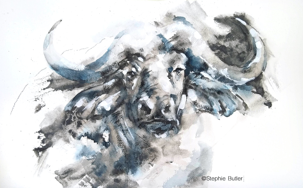 Wildlife in Watercolour & Liquid Charcoal with Stephie Butler