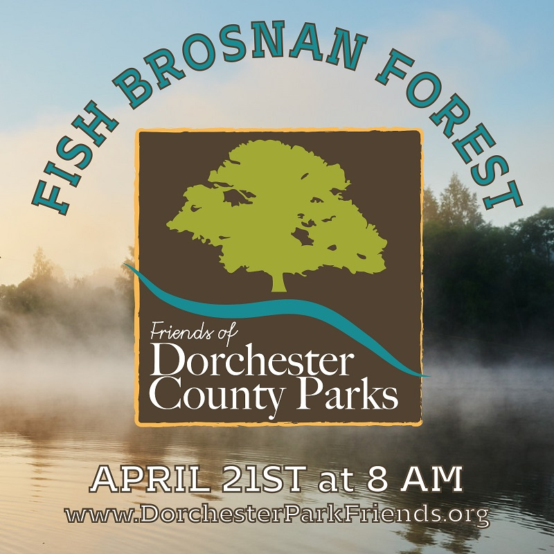 Fish Brosnan Forest Ad Piece
