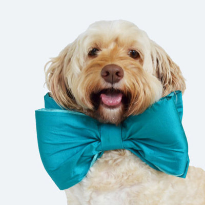 .https://www.etsy.com/shop/DoggieBowtieCollars?ref=profile_shopname