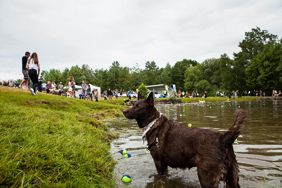 Bark in the Park 2019 london; dog at event pond