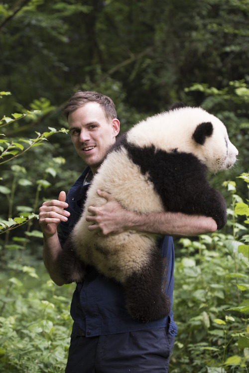 Dr Jake Owens cuddling a Giant Panda over his shoulder.