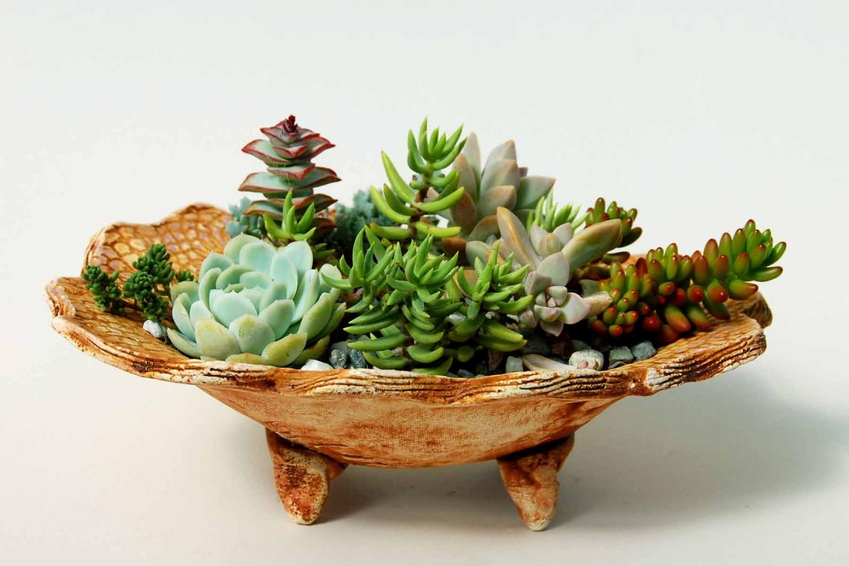 How to make a dish garden tickets sat aug 6 2011 at 10 00 am eventbrite - Dish garden containers ...
