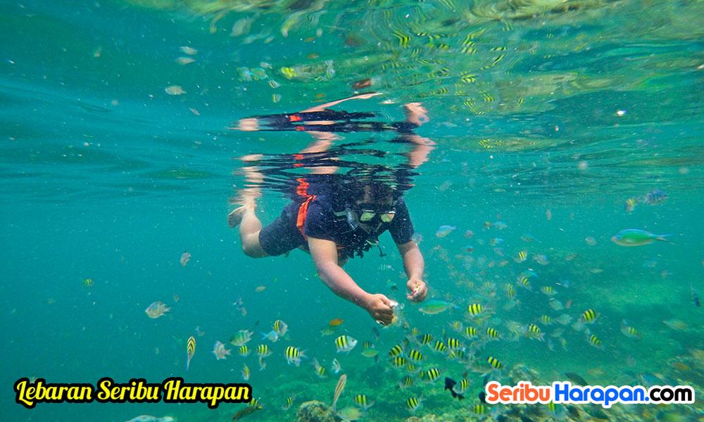 snorkeling di spot pulau putri