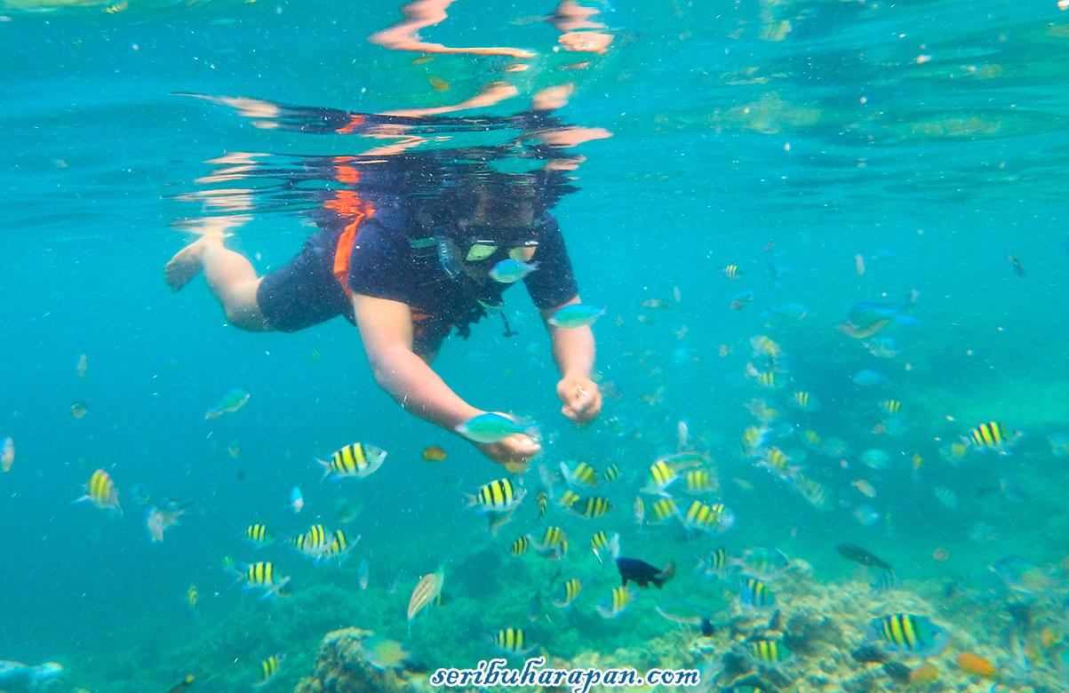 snorkeling pulau putri pulau harapan kepulauan seribu utara