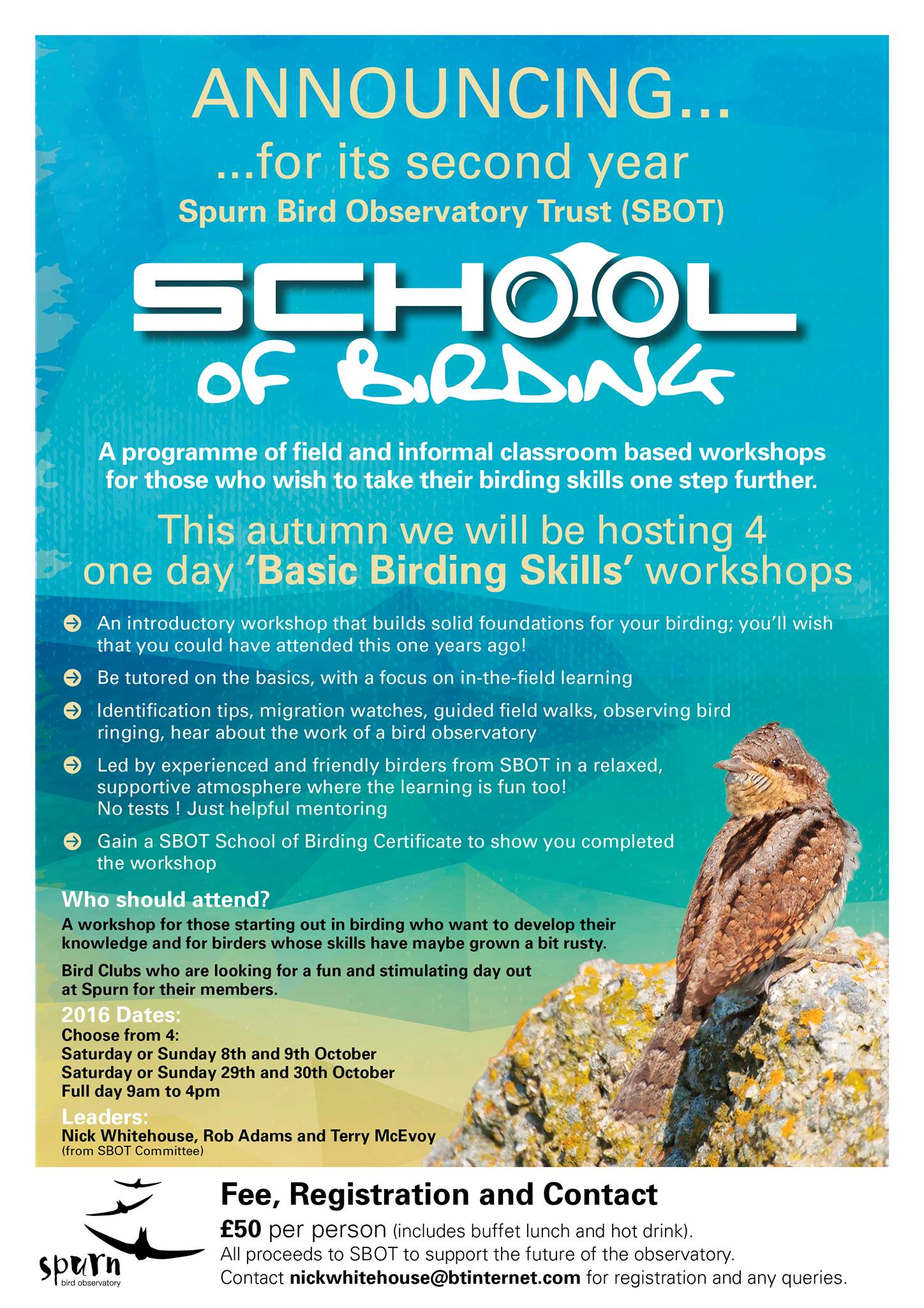 School of Birding Logo