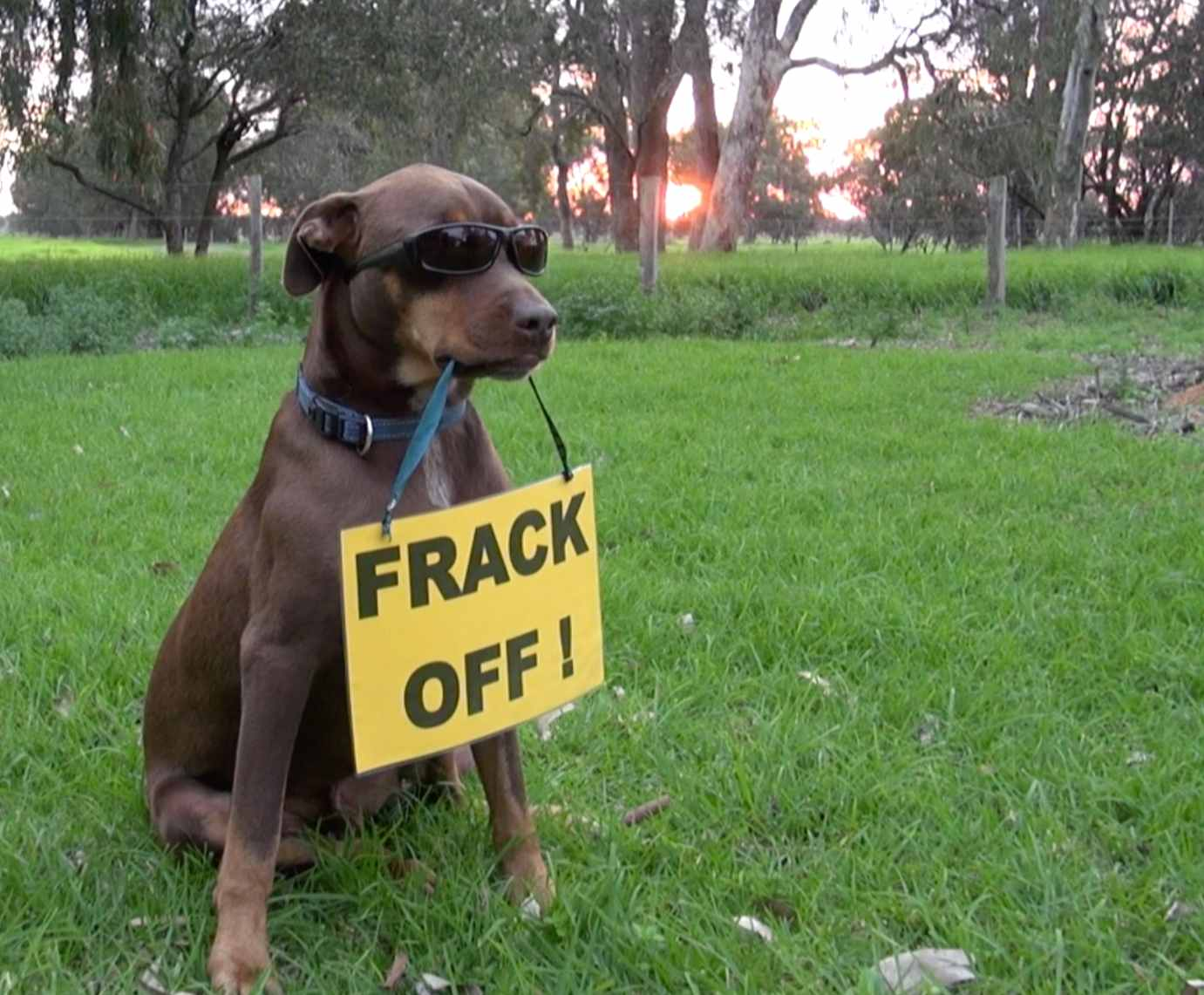 Picture of dog with frack Off sign