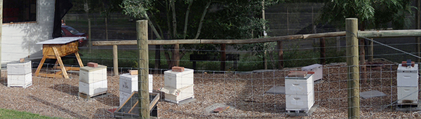 Collingwood Children's Farm Apiary