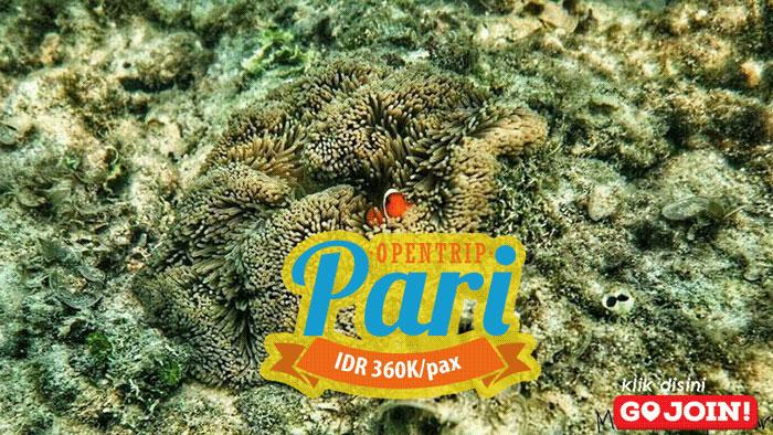 Open Trip Pulau Pari Kepulauan Seribu Selatan Jakarta