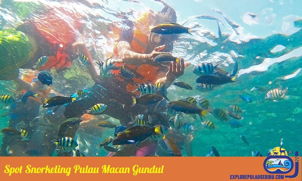 spot snorkeling pulau macan gundul
