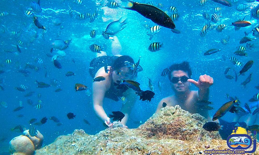 Snorkeling di Pulau Harapan dan Pulau Kelapa