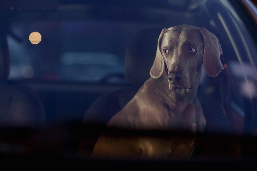 Dogs in Cars - Martin Usborne