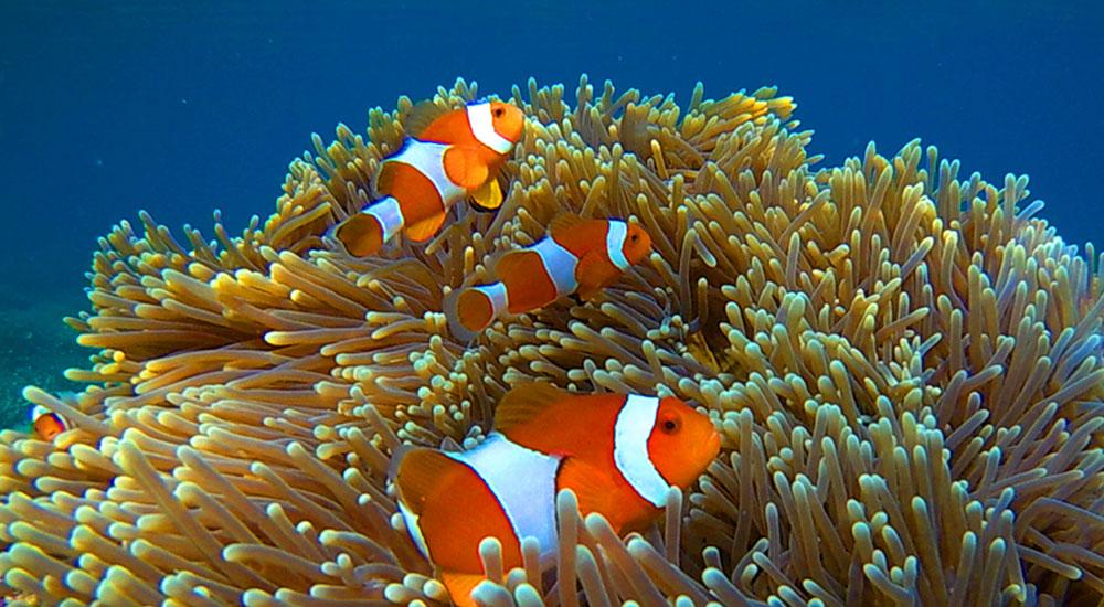 wisata bahari kepulauan karimunjawa jawa tengah