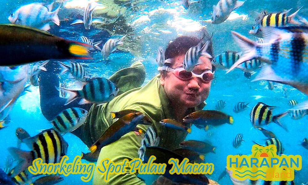 spot snorkeling di pulau macan pulau harapan kepulauan seribu utara