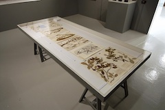botanical specimens in a museum case