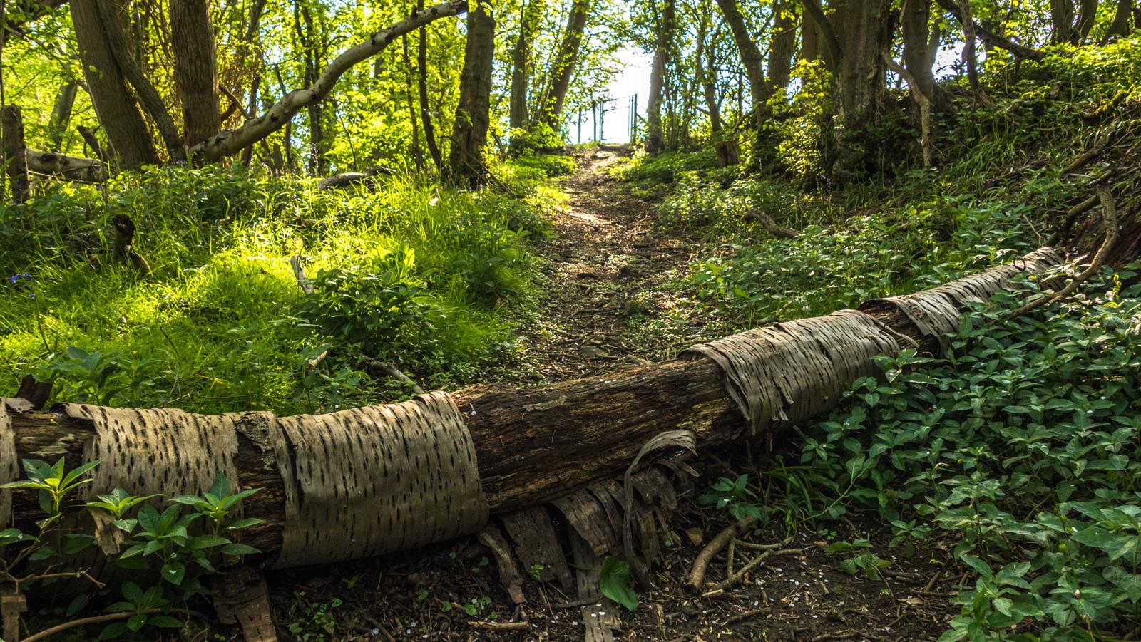 Elham Valley Ancient Woods