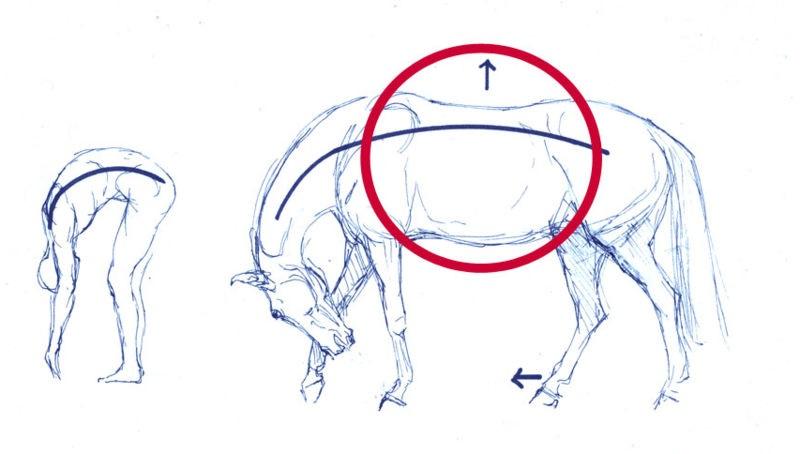 Human - Horse