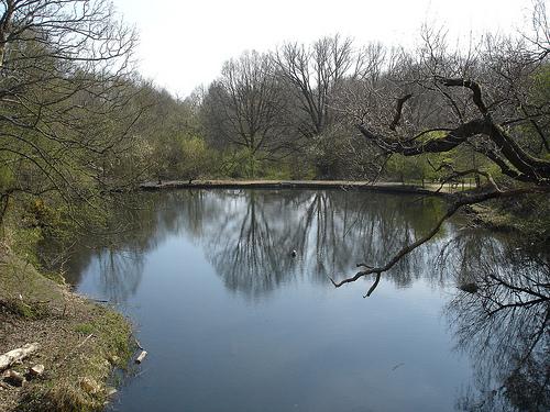 Viaduct Pond
