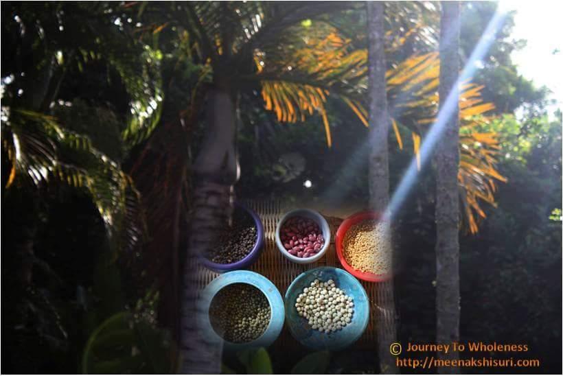 Seeds Palms sunrise