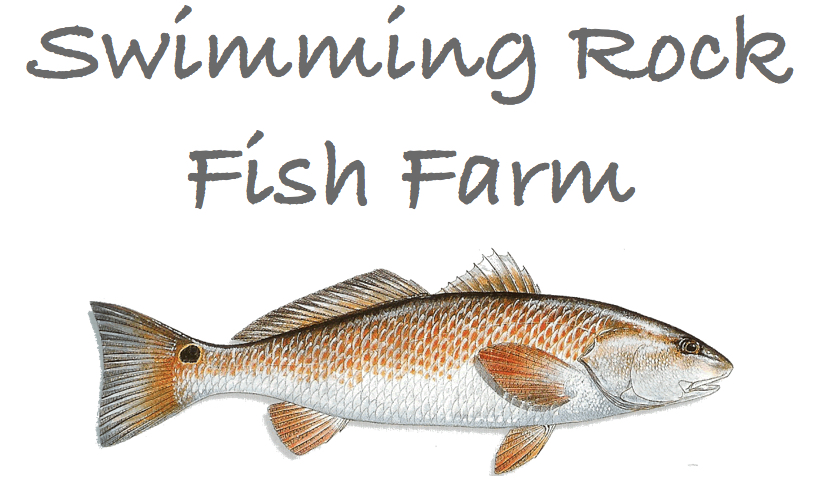 Swimming Rock Fish Farm Logo