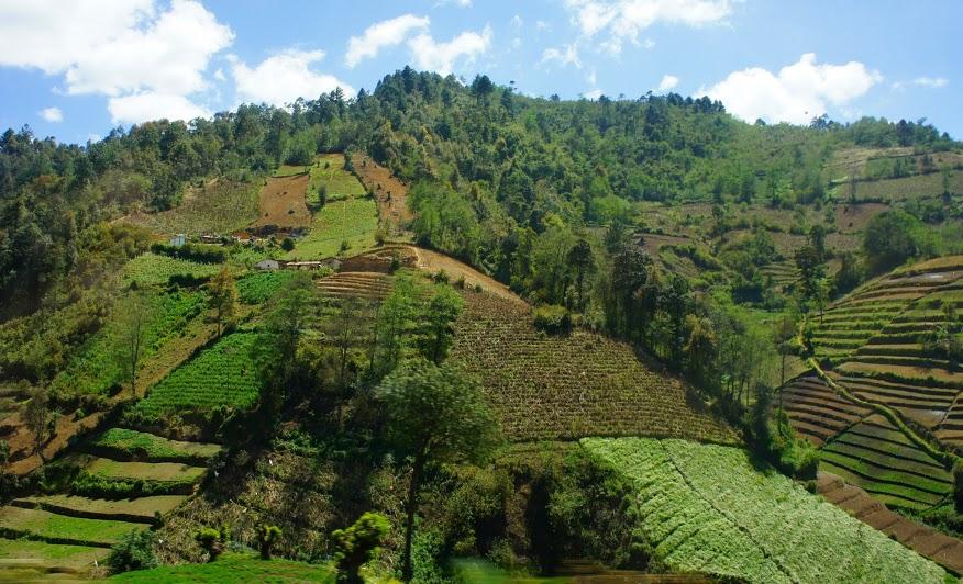 Guatemalan Countryside