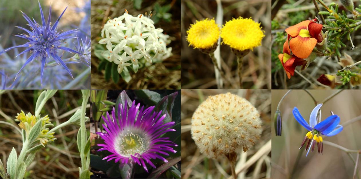 VVP wildflowers