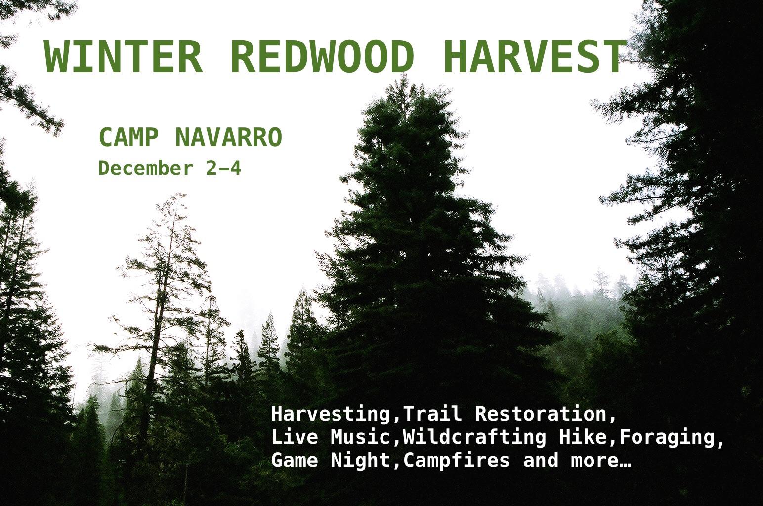 Winter Redwood Harvest