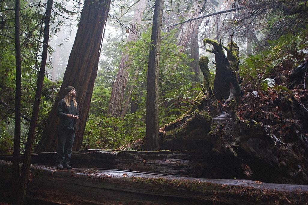 Redwood hike