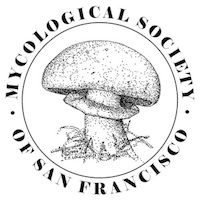 MSSF Logo