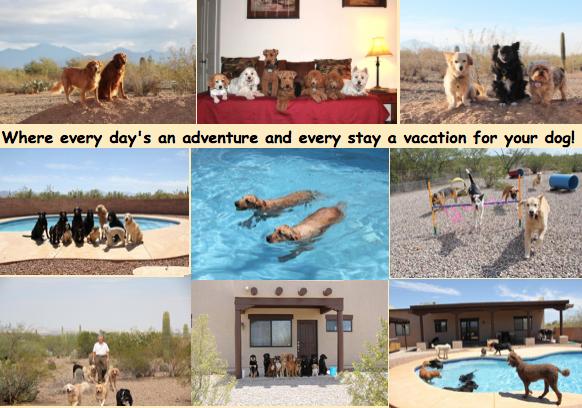 Tucson Adventure Dog Ranch