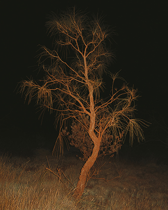 A tree illuminated at night with a black background