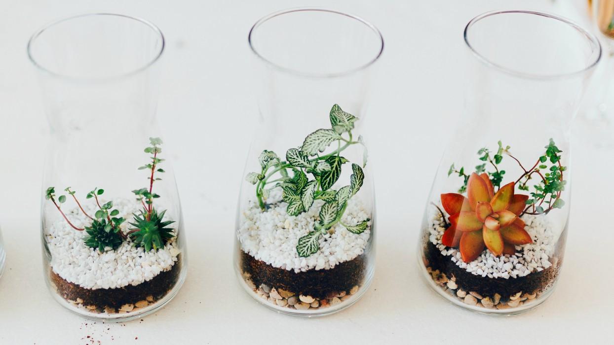 Terrariums hechos en el taller de Greenworks