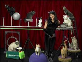 The Amazing Acro-Cats Meowy Christmas Show