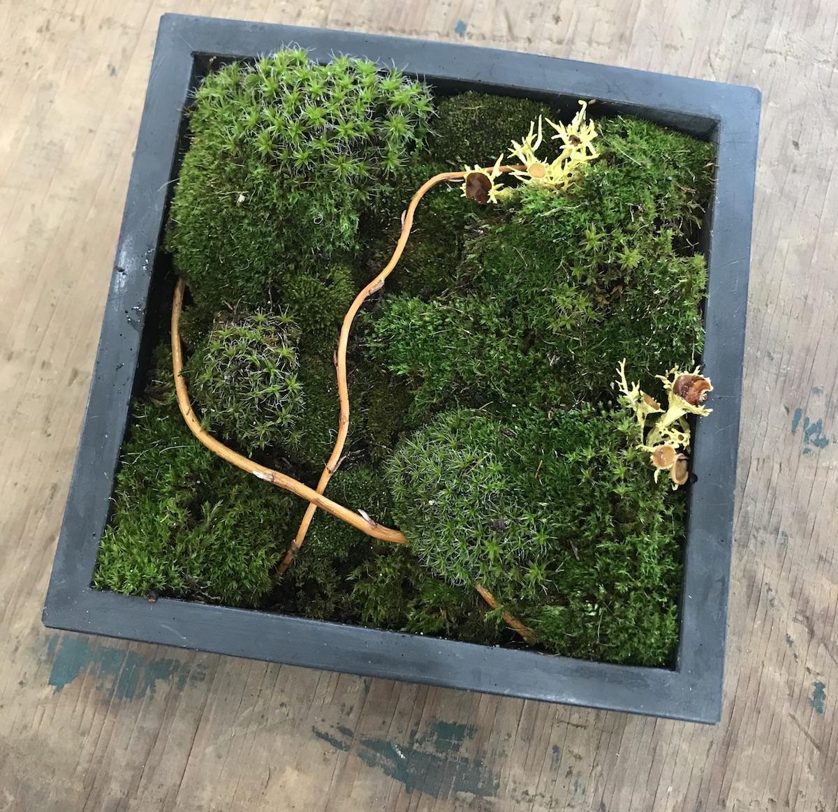 arrangement of moss in cement box