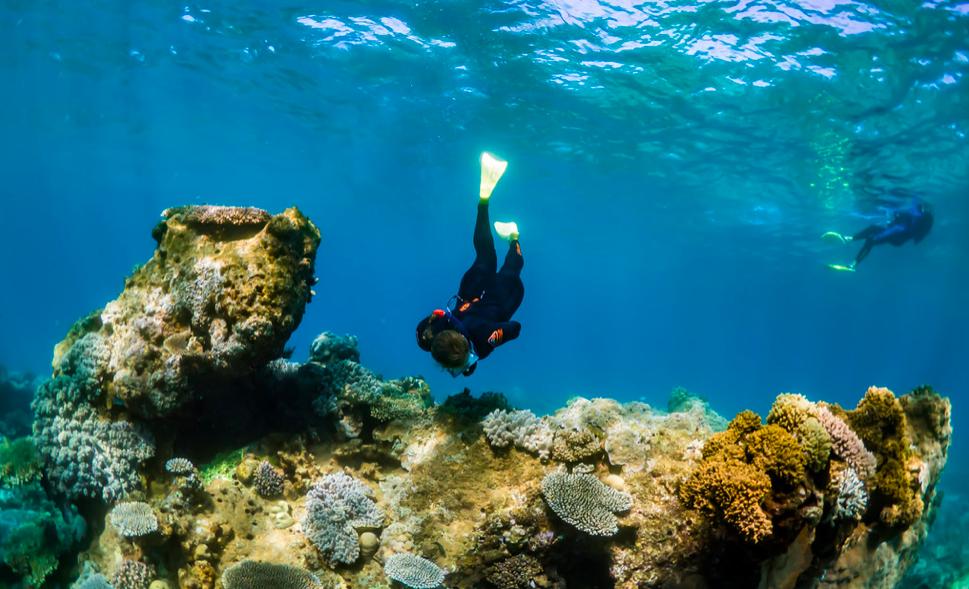 Diving on Ningaloo Reef
