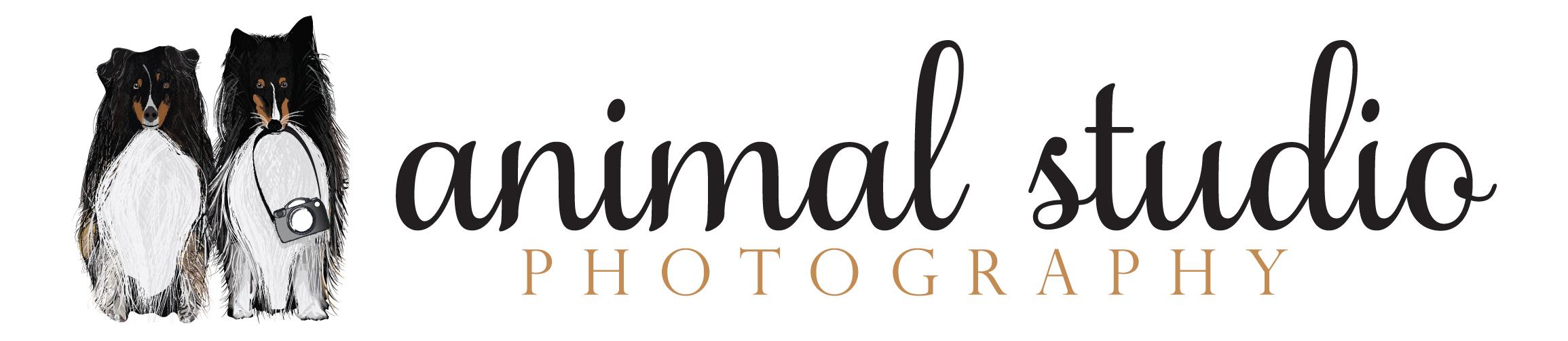 animal studio photography logo