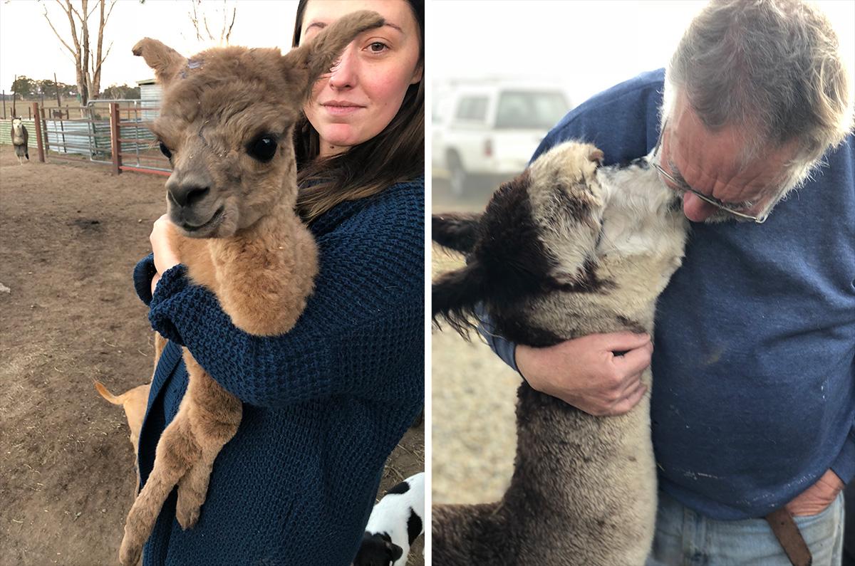 Alpaca Experience