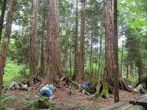 Shinrin yoku walkers enjoying time in nature