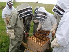 Bee Keeping Taster Day