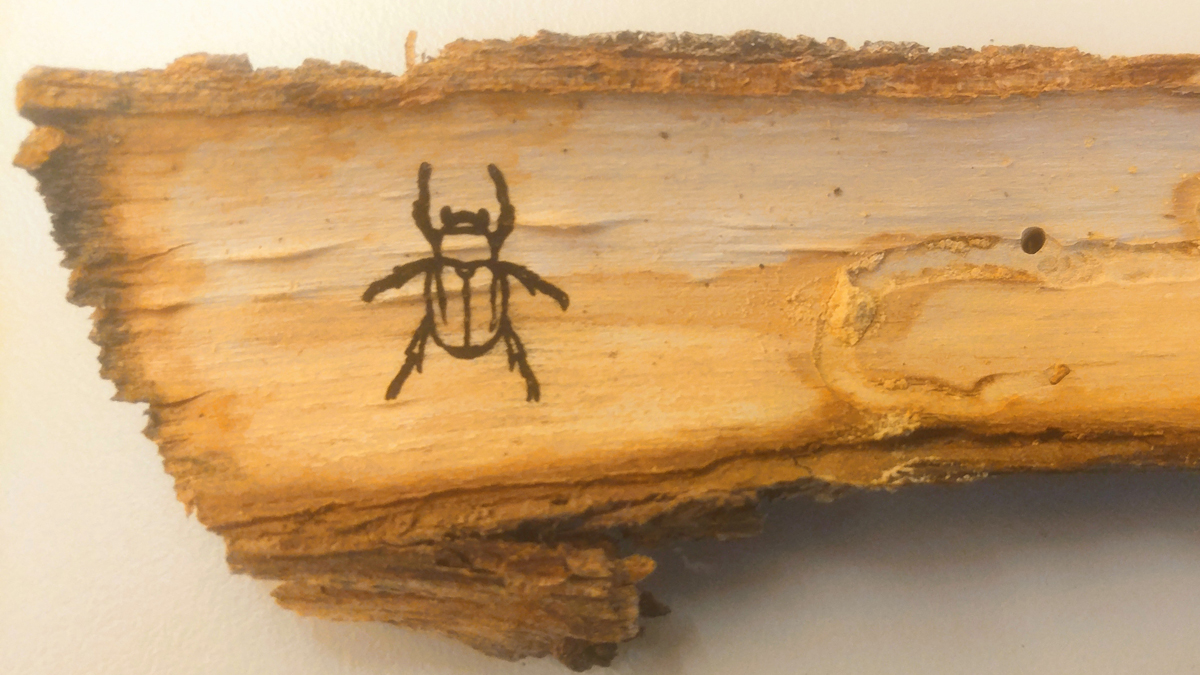 Laser etched beetle on bark