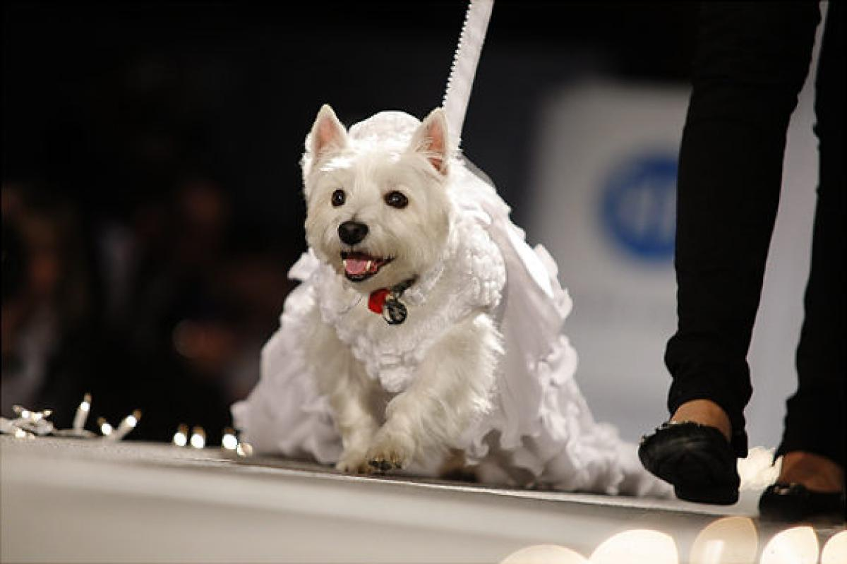 Image result for dog fashion show