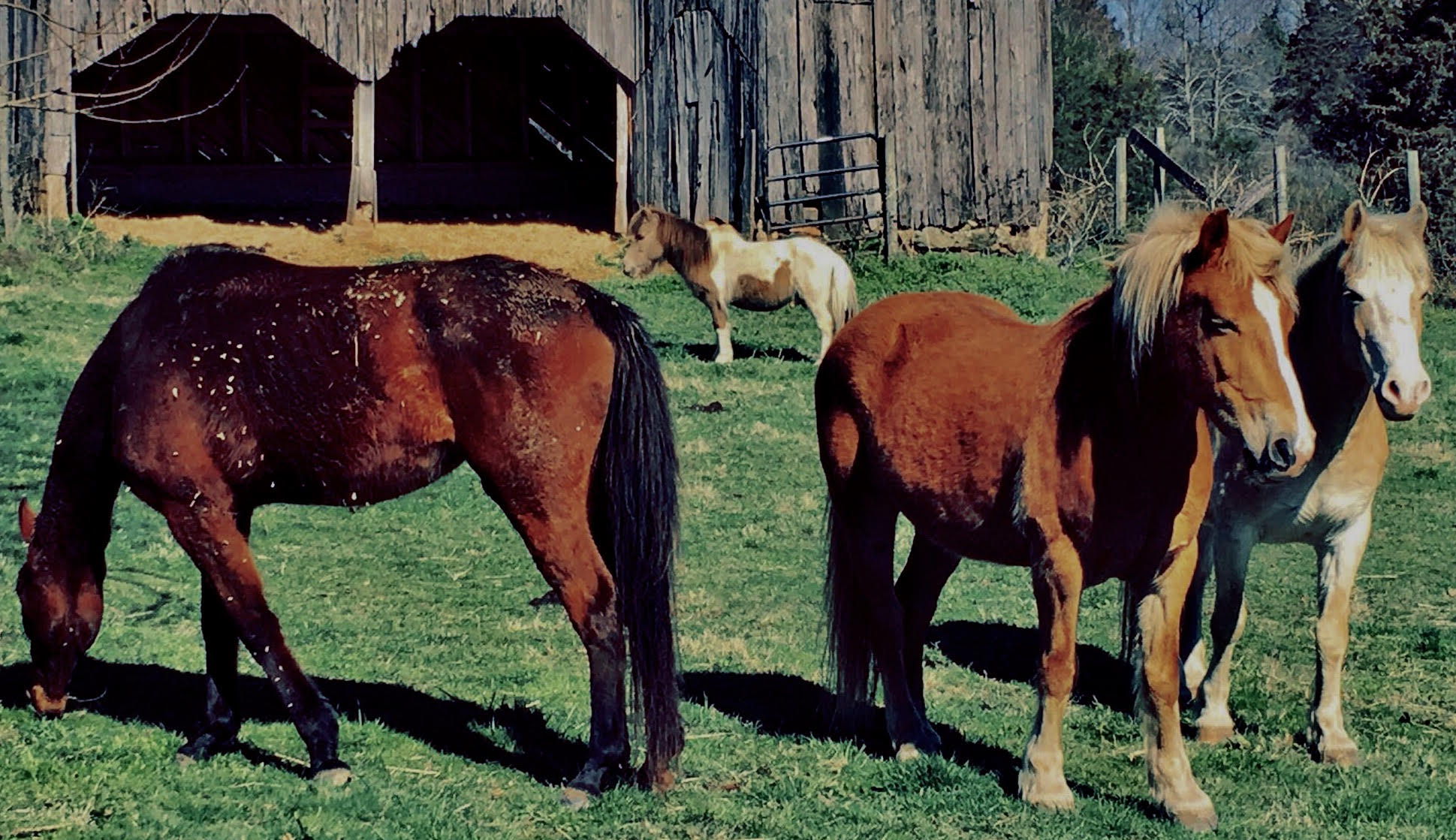 Horses on The Farm