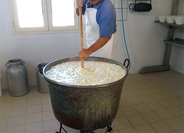 Shepherd making cheese