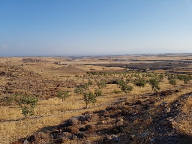 Atsas agroecology olive grove