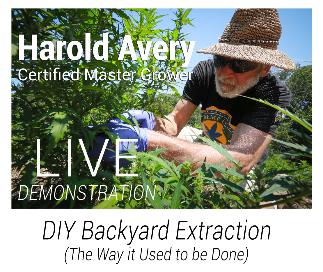 Harold Live demo