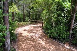 McKinney Path