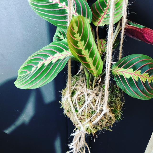 plant shop brighton