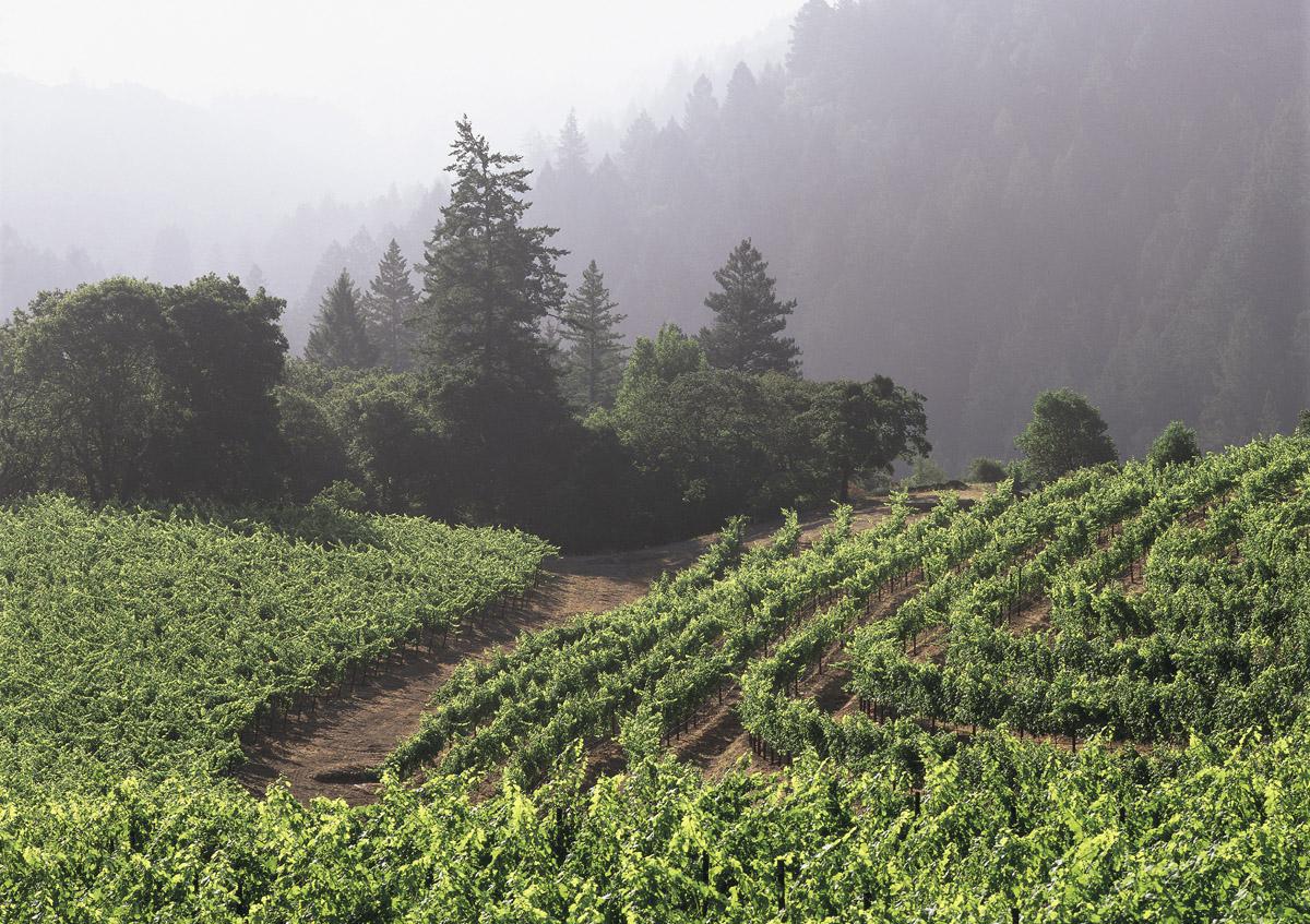 Marsten Vineyard