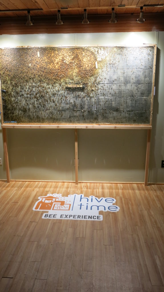 Hive Time's One Of A Kind Observation Hive