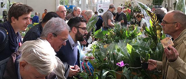 Verkoop door orchideeënkwekerijen